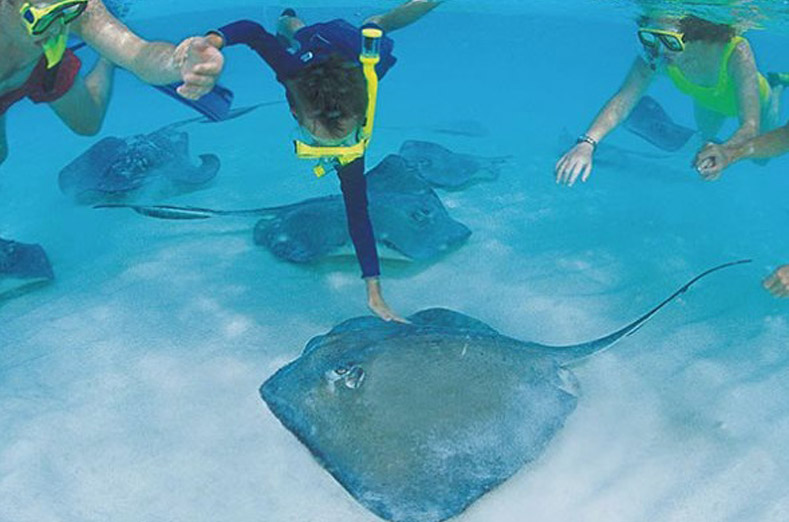 Stingray City tours - CayTours
